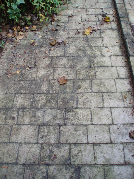 Driveway cleaning essex patio cleaning essex pressure for Cleaning concrete paths